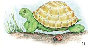 Ladybug & Turtle